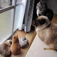吉田家の猫