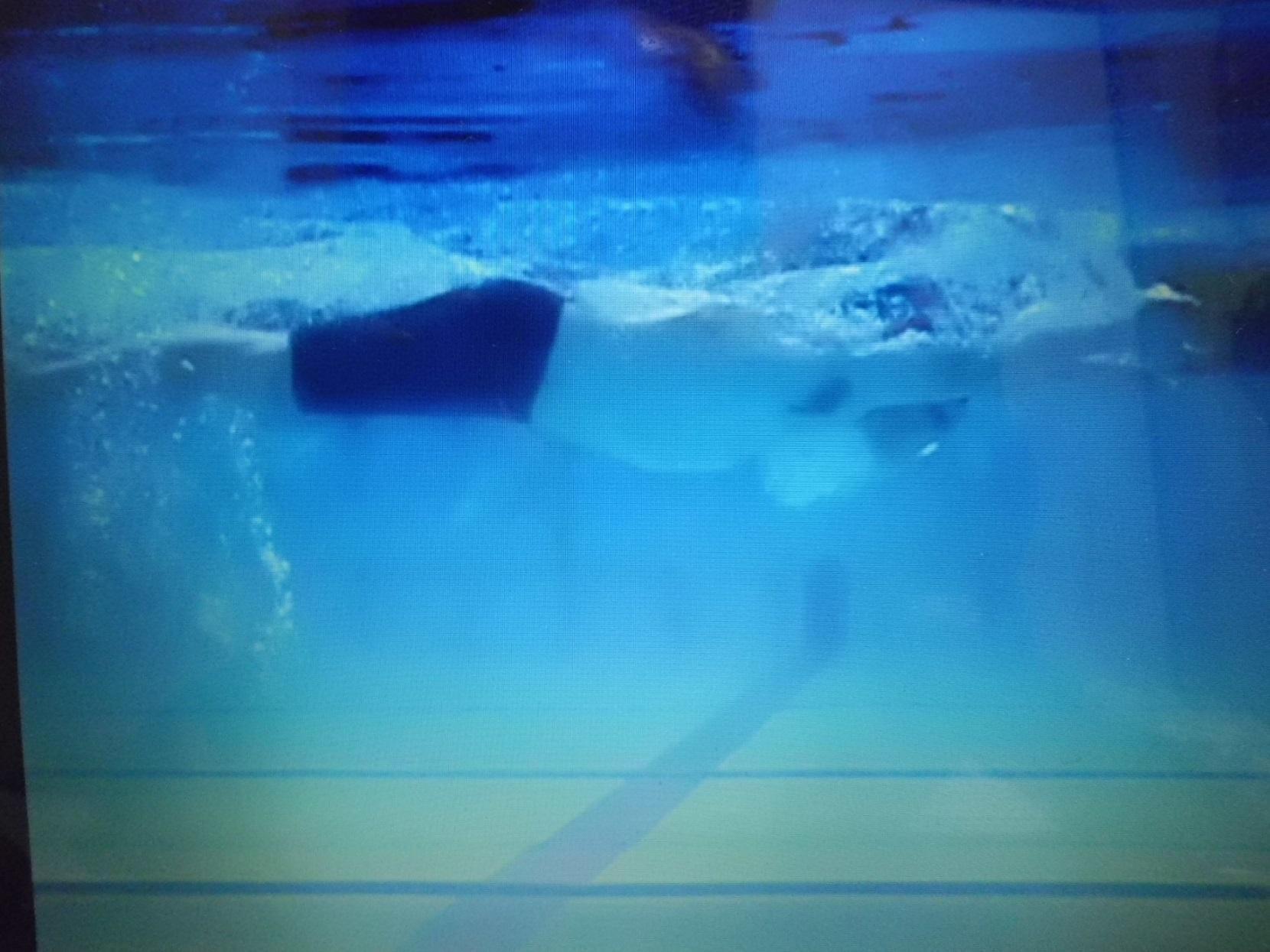バタフライ水中映像