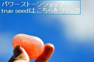 true seed~スタッフブログ~