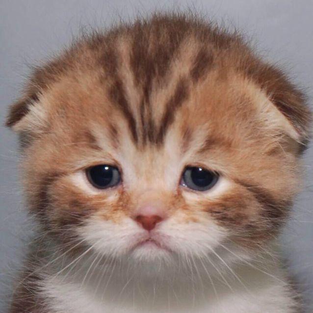 おいしそうな脚の女子校生 237脚目猫ガイジ隔離スレ [無断転載禁止]©bbspink.comYouTube動画>1本 ->画像>3291枚