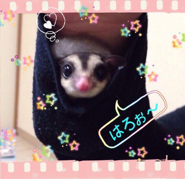 ・*:.。.☆友〜happy  lab〜☆.。.:*・