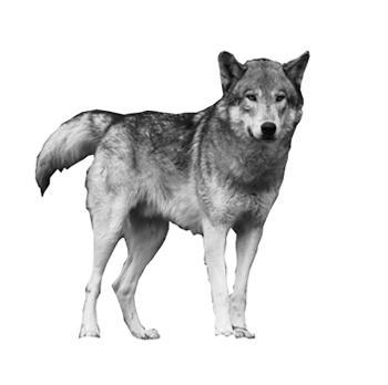 狼グッズ専門店【Wolf-fans.com】