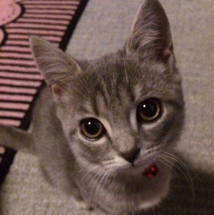 猫ちゃん大好きlittle-paw8778