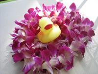 Hawaii Ducky