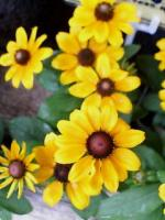黄色いお花!
