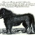黒狗 皐羅のプロフィール