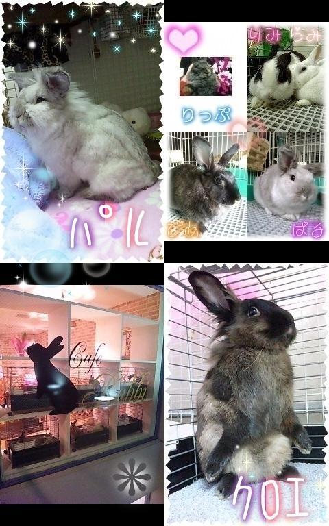 ウサギの豆知識【素人判断・強制給餌】