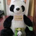 二代目パンダ店長のプロフィール
