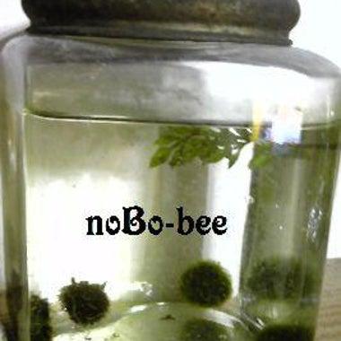 noBo-bee
