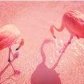 flamingoのプロフィール