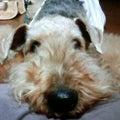 dog nanny-ayanoのプロフィール