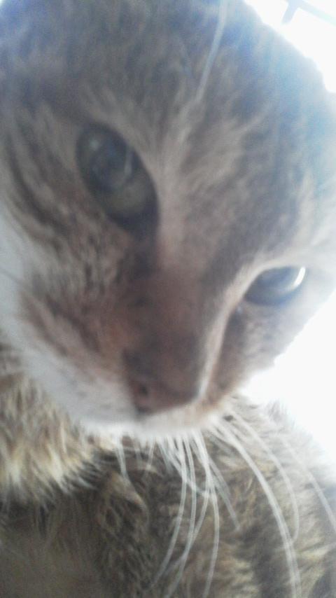猫魂 kazu