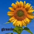 girasol-marのプロフィール