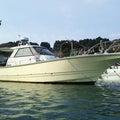 遊漁船・海坊主V つぶやきブログのプロフィール