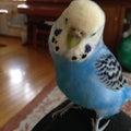青い鳥のプロフィール