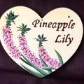 Pineapple Lilyのプロフィール