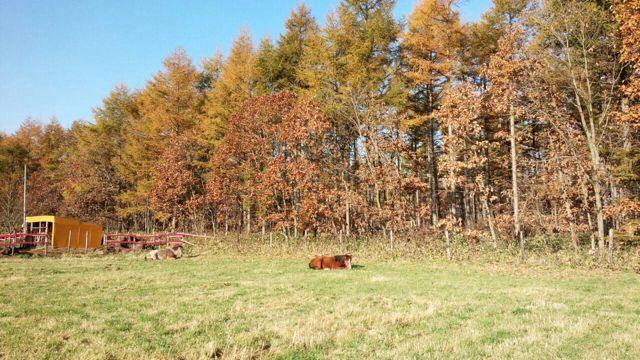 北海道  牧場の日々