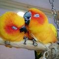 birdcage2014のプロフィール