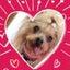 画像 Ameba 岡山保護犬日記 のユーザープロフィール画像