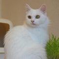 Cara Cat Cafeのプロフィール