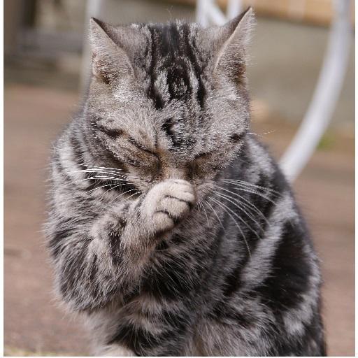 jingle elegiac cats