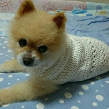 『yunoie』わんこセーターのお店