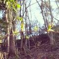 Akiha里山子育て支援センター「森のいえ」のプロフィール