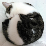 森 秋子のプロフィール画像