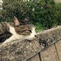 立命館大学猫の会 RitsCatのプロフィール