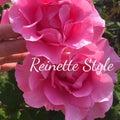 Reinette Styleのプロフィール