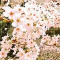 樹咲リヨコのプロフィール