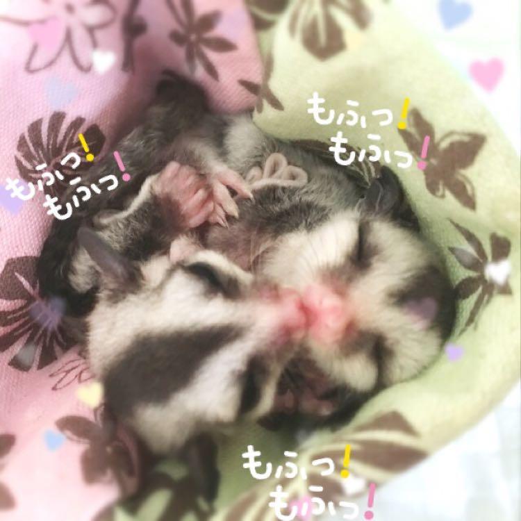 ☆ミッシェル☆