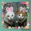 画像 chikoと愉快な毛深い仲間達のユーザープロフィール画像