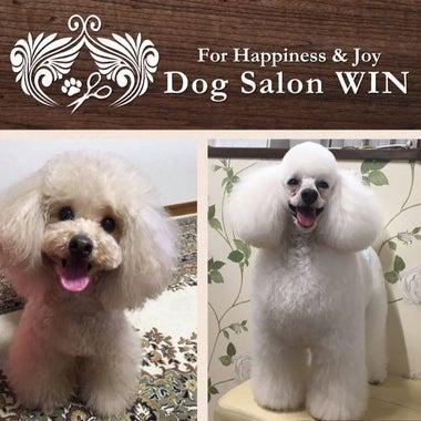 Dog Salon WIN