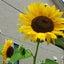 画像 sunsan *名古屋で衣・食・遊*のユーザープロフィール画像