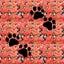 画像 四十郎の多肉ブログのユーザープロフィール画像