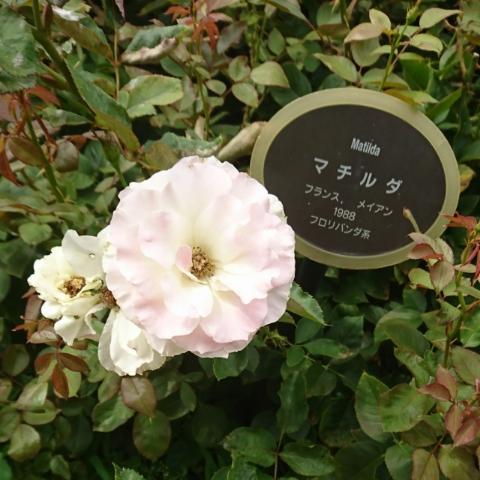 happy-aroma0627