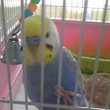 「幸せの青い鳥」「Toshl love」