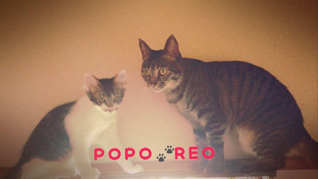 レオ&ポポのママ