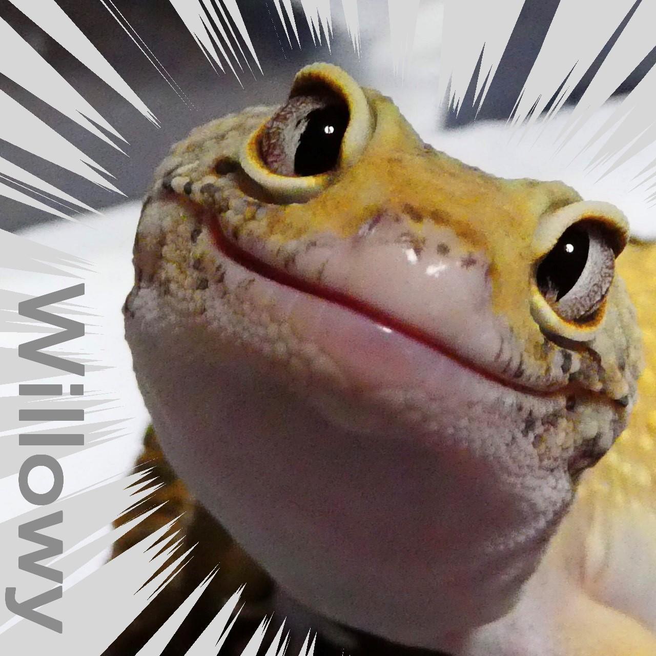 ウィロウィー