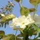 springgarden73