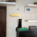 catsitter-miuraのプロフィール