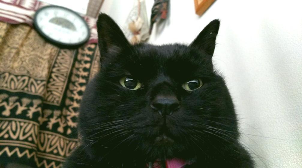 金爆時々黒猫