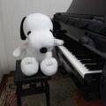摂津市ピアノ教室ふくながピアノ教室のプロフィール