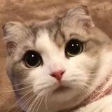 MOAのプロフィール画像