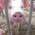 豚っくのプロフィール