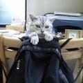 catcatcatのプロフィール