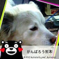 sakuちゃんのプロフィール