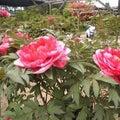 花と泉の公園のプロフィール