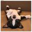 画像 Anglershighごめのブログのユーザープロフィール画像